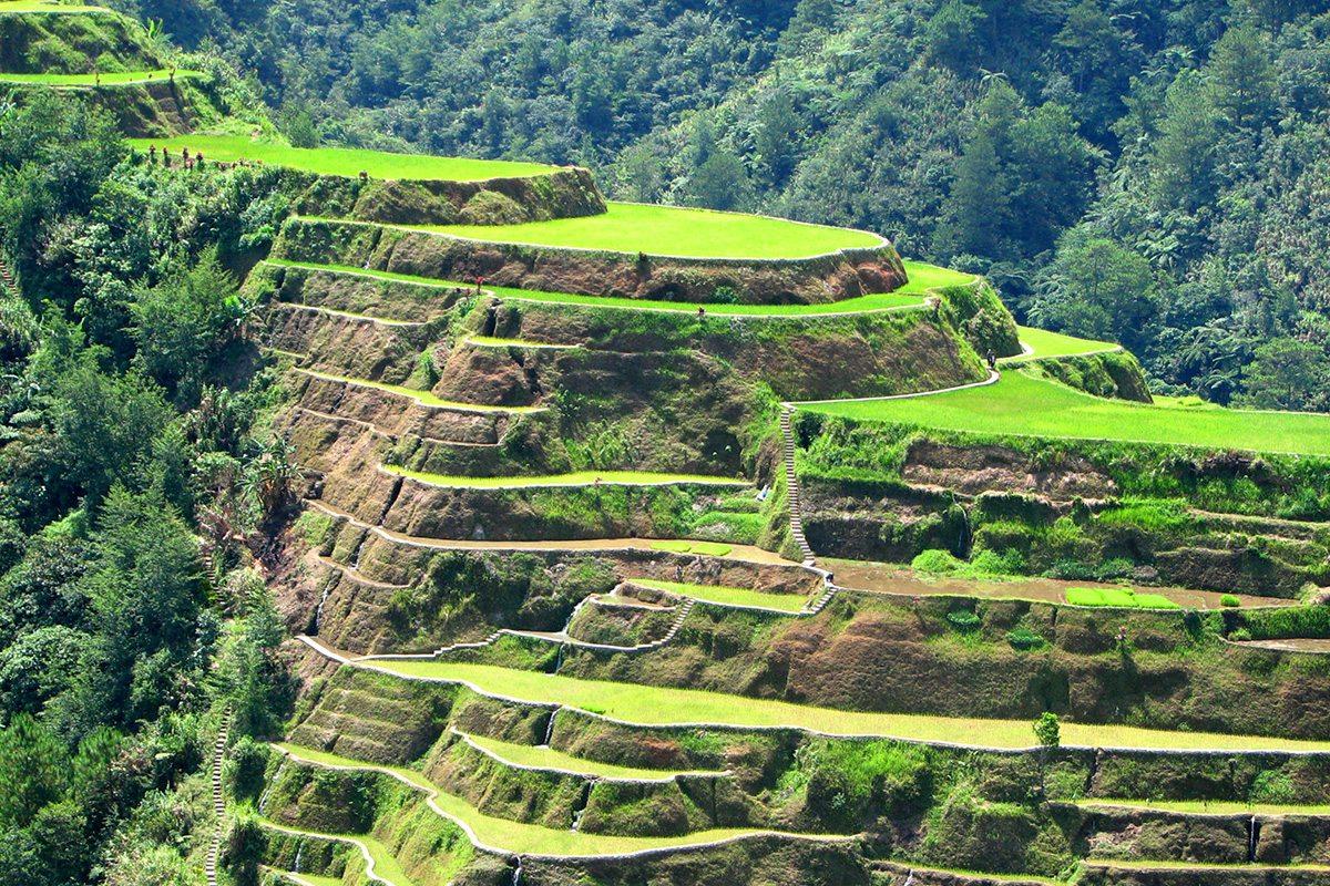 čajové polia na Filipínach