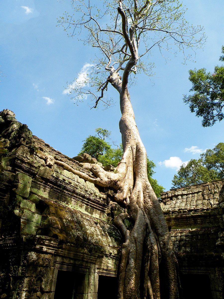 strom v chráme
