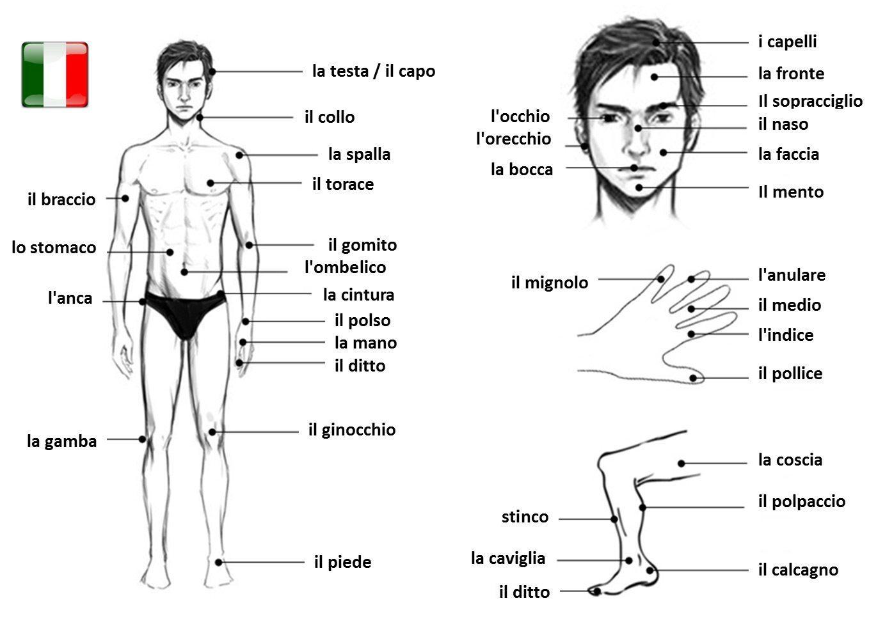 časti tela po taliansky