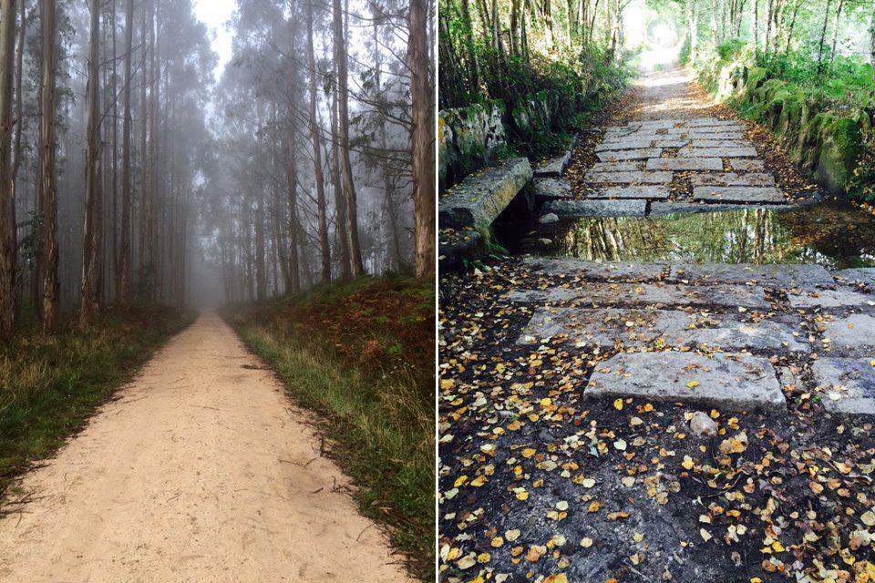 camino lesné cesty