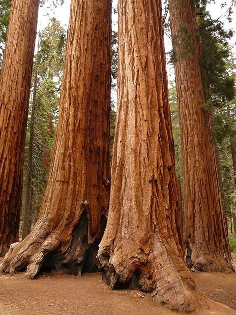 tree-4890_640