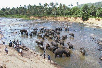 srí lanka slony