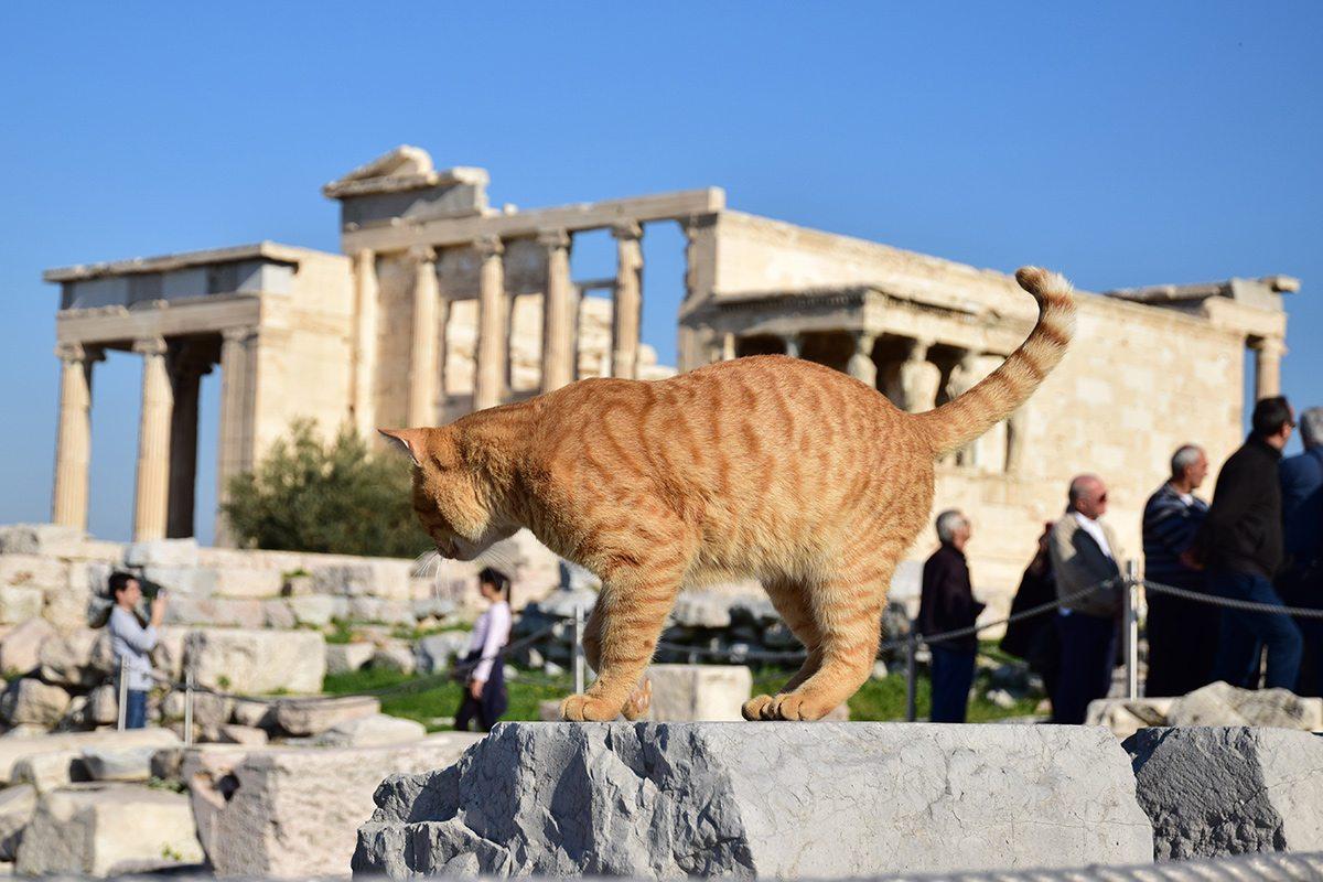 akropola Erechteion