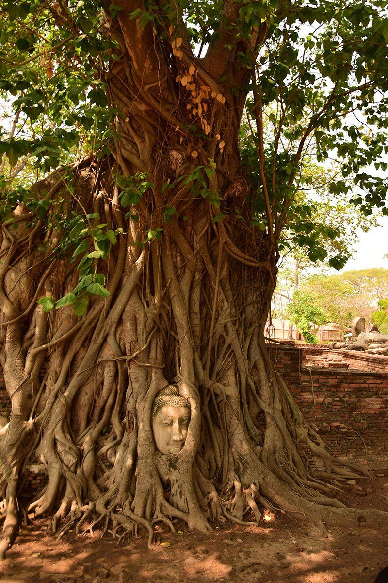 Budha v strome