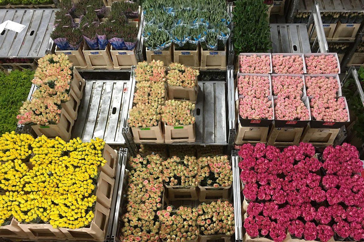 kvetiny, holandsko