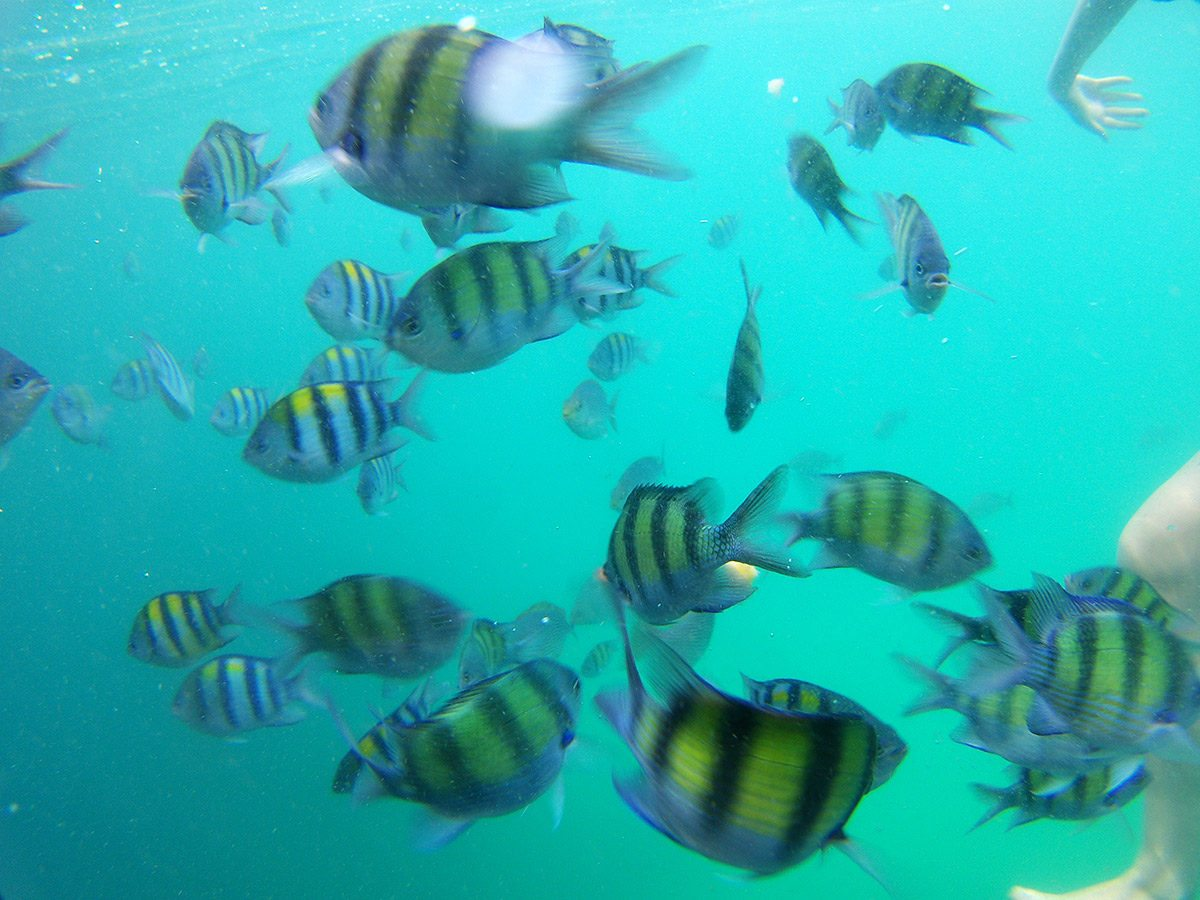 thajské ostrovy - tigerfish