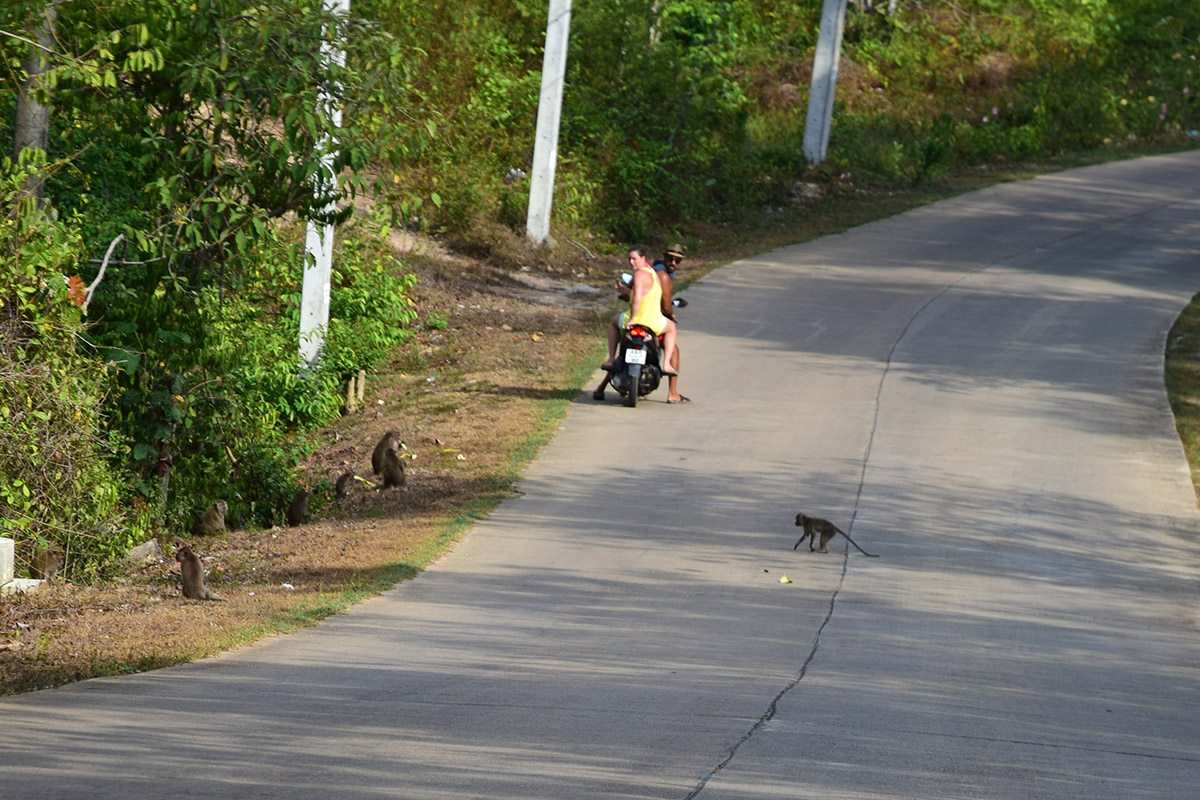 opice na ceste