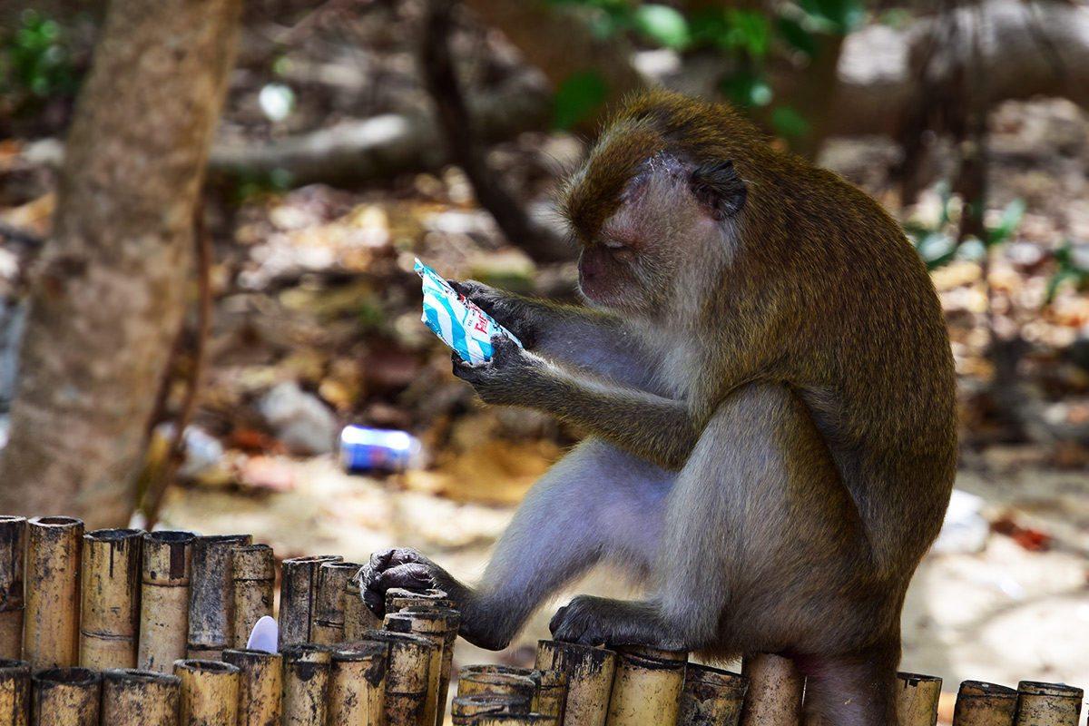 opičiak