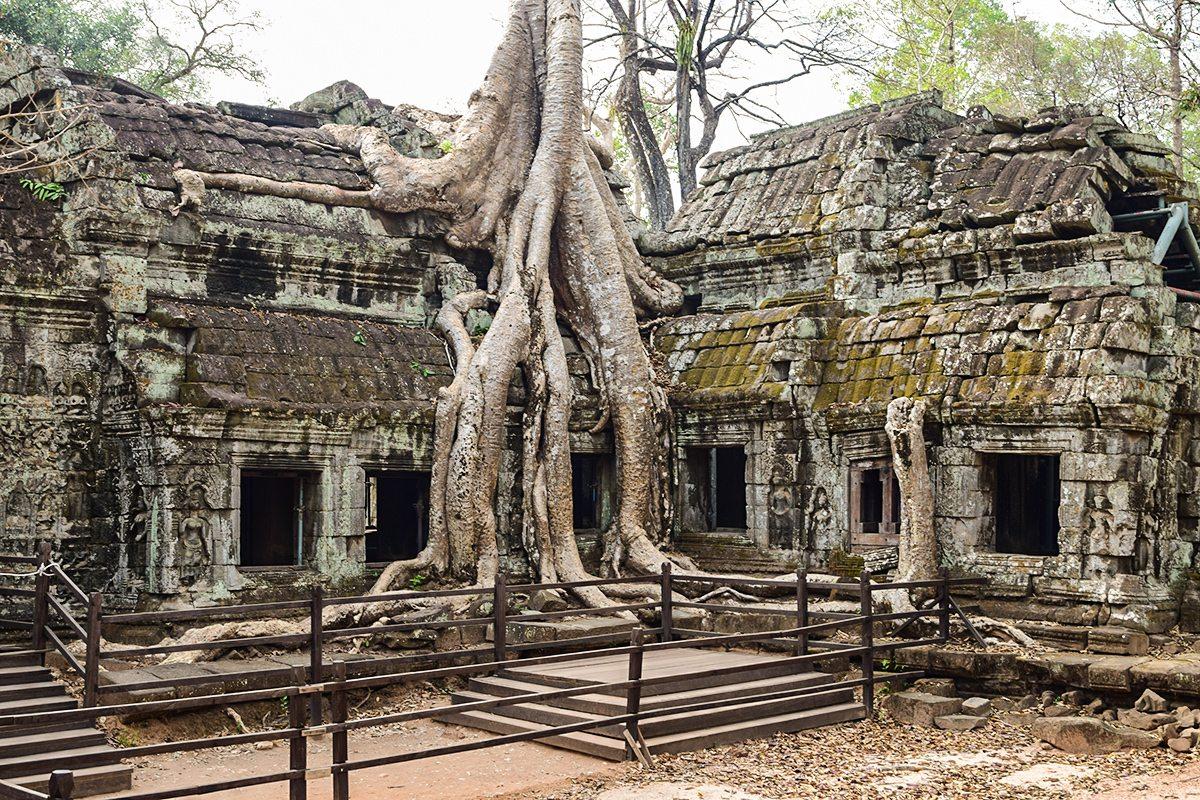 stromy angkor