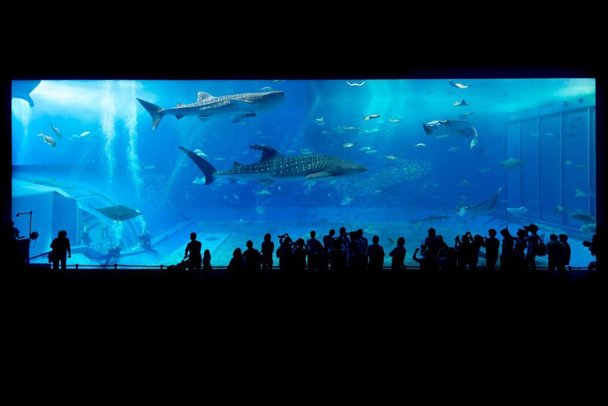 najväčšie akváriá - Okinawa Churaumi