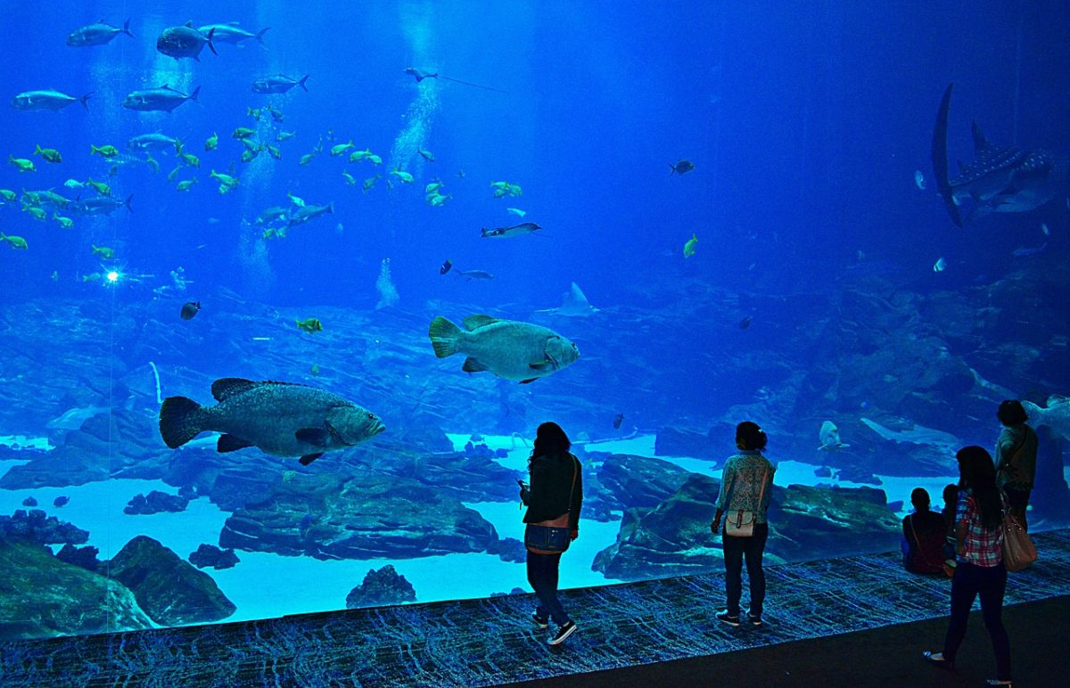 najväčšie akváriá - Georgia