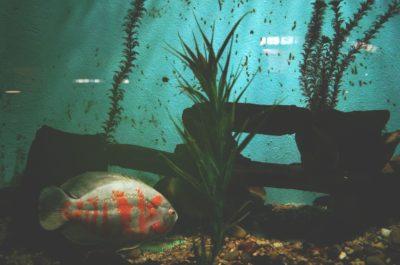 najväčšie akváriá - titulka