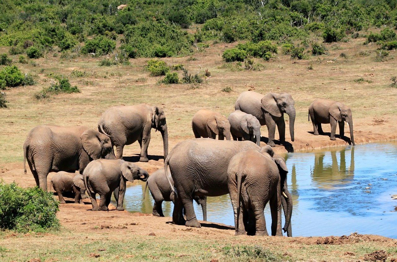 safari - afrika v zime