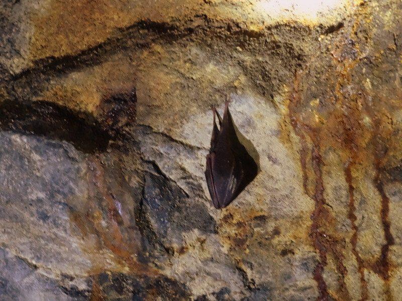 Spiaci netopier, vraj Fero