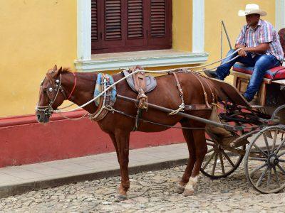 koč s koňom trinidad