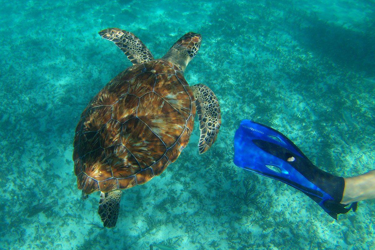 Mexiko - plávanie s korytnačkami