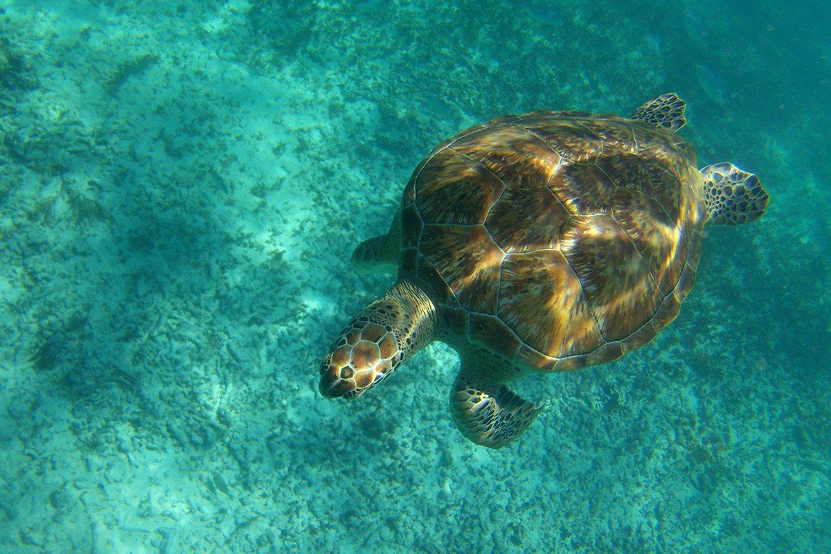 Morské Korytnačky v Tulum