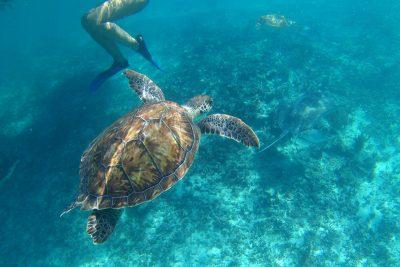 Mexiko - šnorchlovanie s korytnačkami