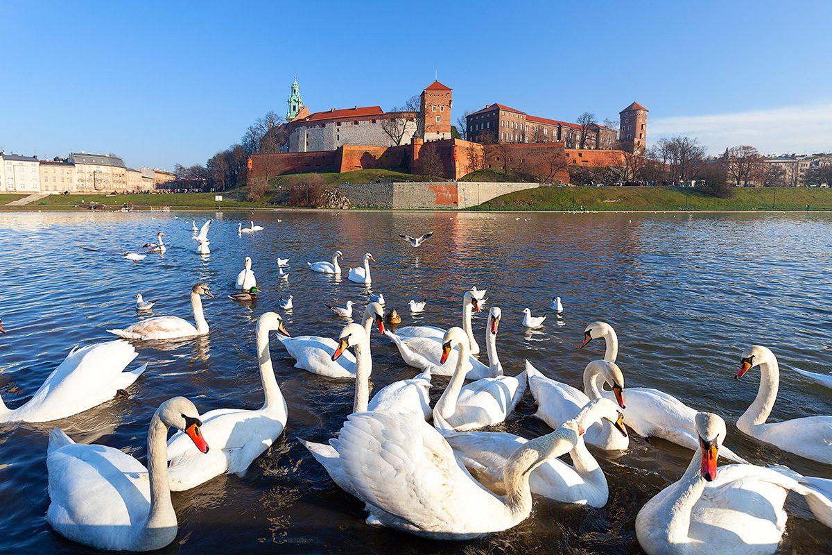 Wawel, hrad v Krakove