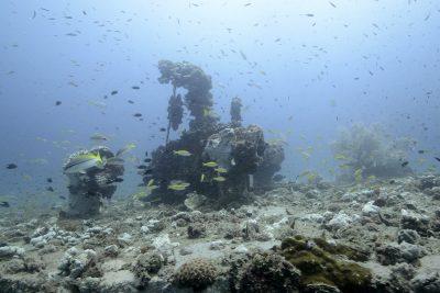 Borneo útesy a koraly