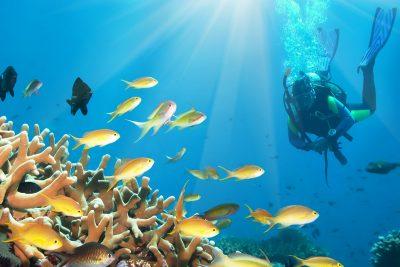 Borneo - podmorský svet