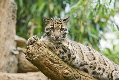 Borneo a jeho fauna