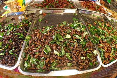 kobylky a vyprážané chrobáky