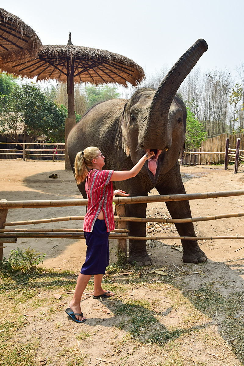 Chiang Mai - kŕmenie slonov