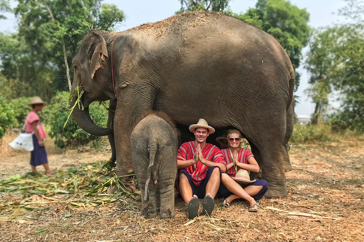 thajsko slony