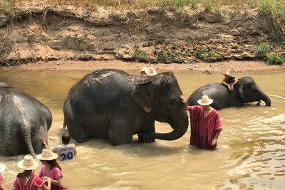 umývanie slonov thajsko
