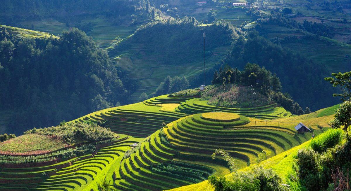 Vietnamské polia