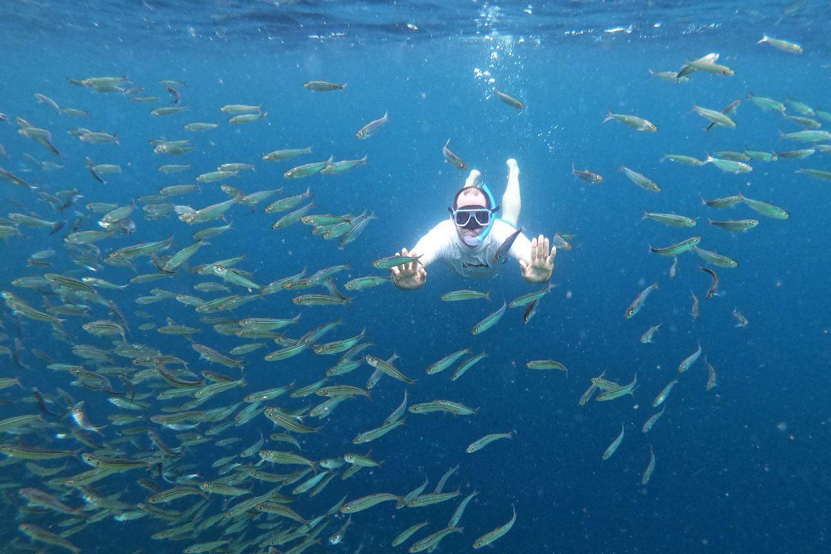 sardinky Moalboal, Cebu