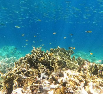 Cebu - Panagsama beach korál