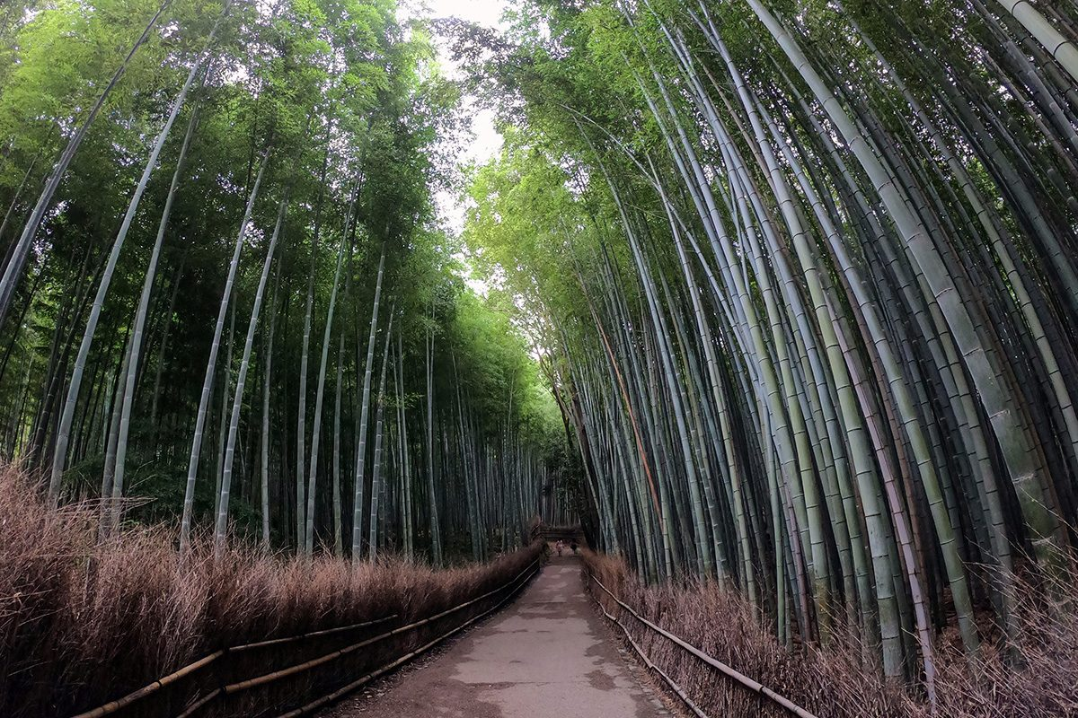 bambusový les v kjóte