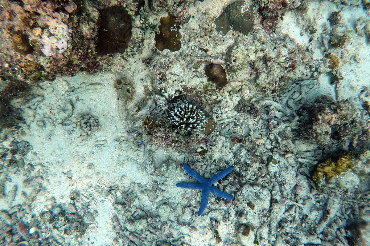 Koralový útes a hviezdica, Cebu, Filipíny