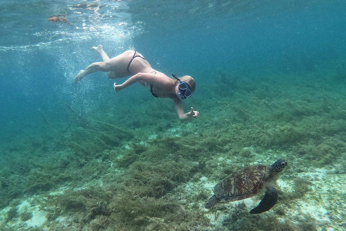 plávanie s korytnačkami Moalboal, Cebu