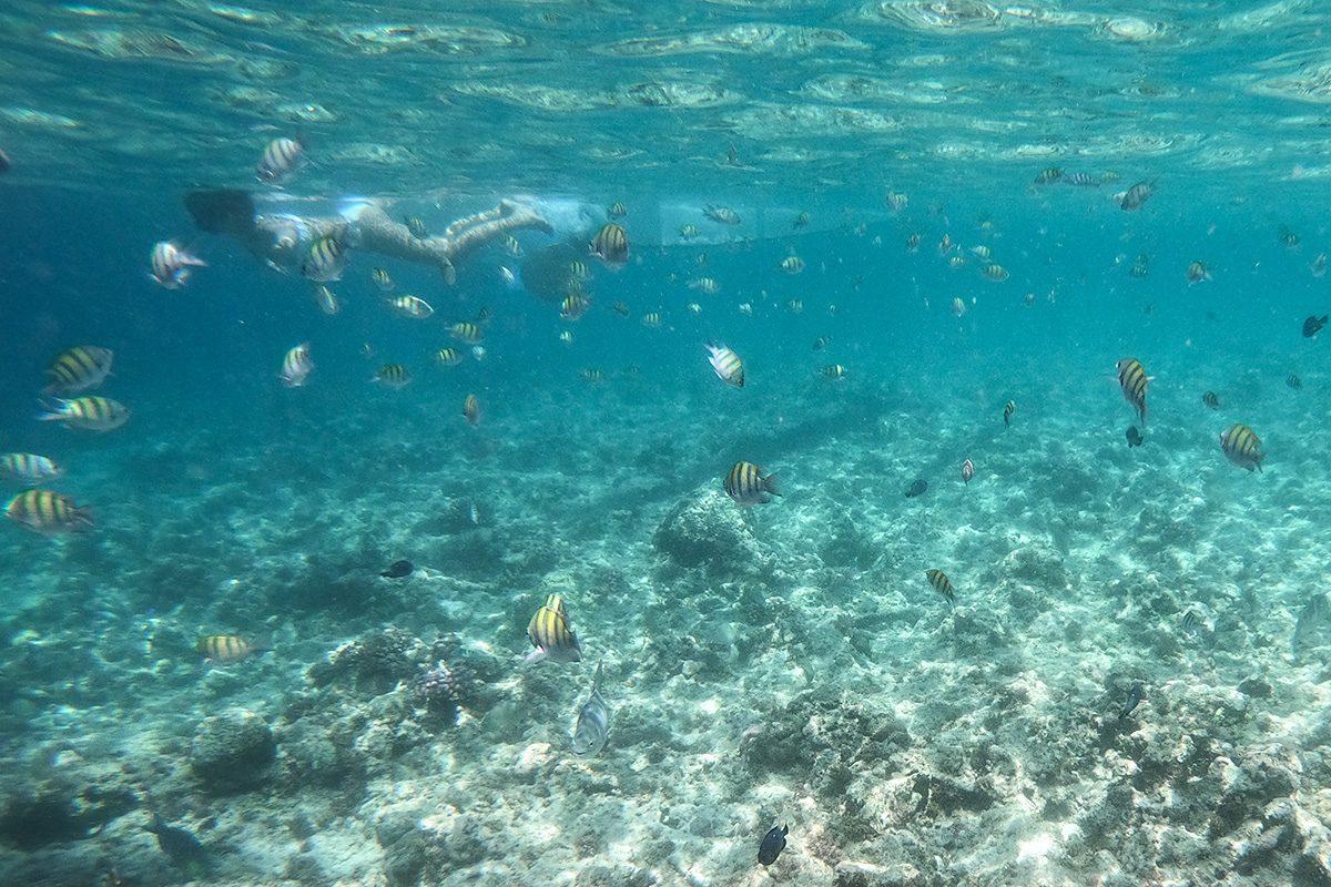 Šnorchlovanie na ostrove Balicasag