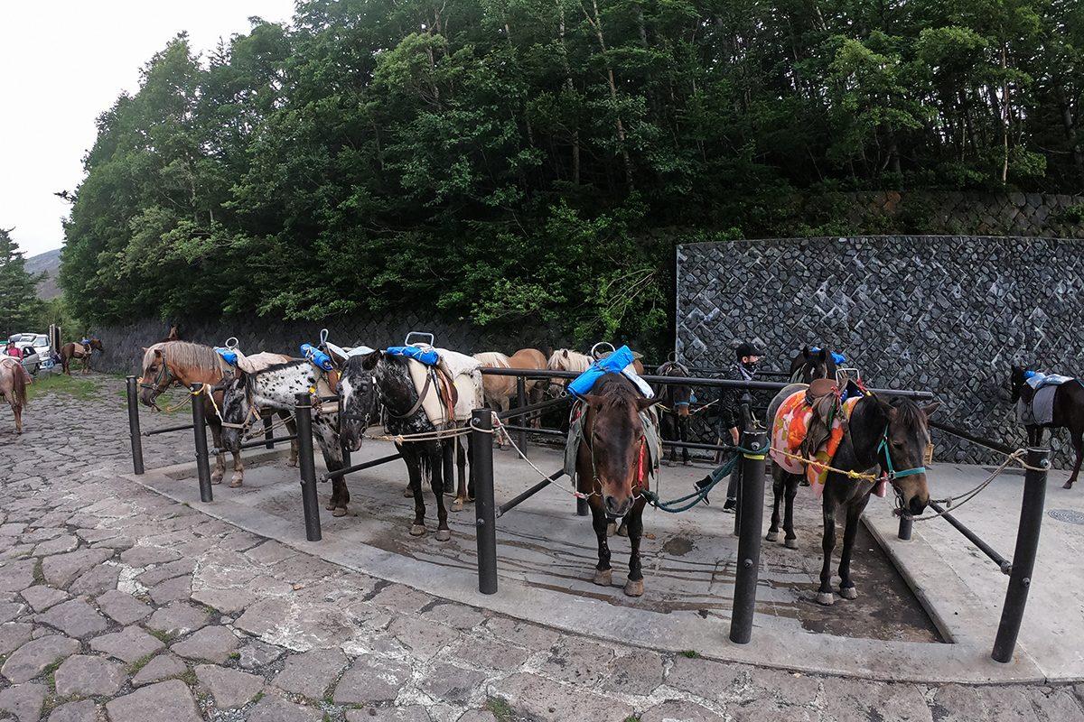 možnosť ísť na Fuji na koni