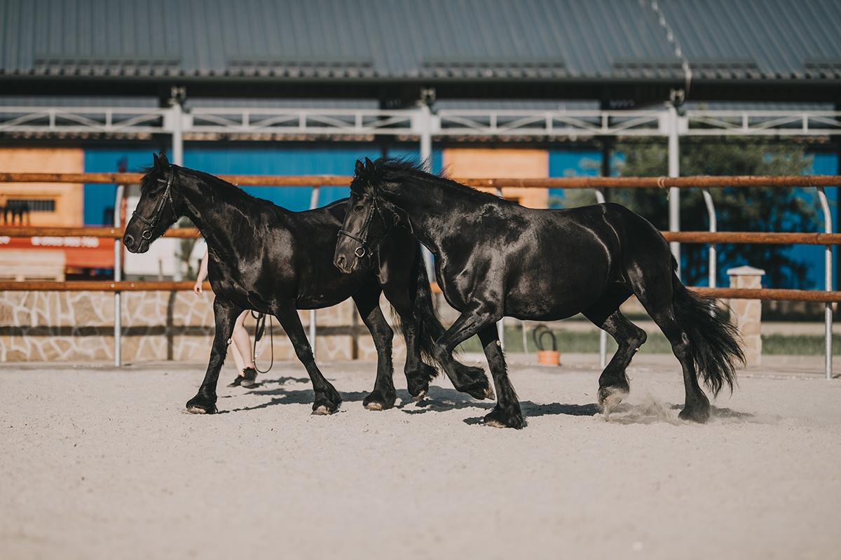 Jazdecký areál Nestville Horses