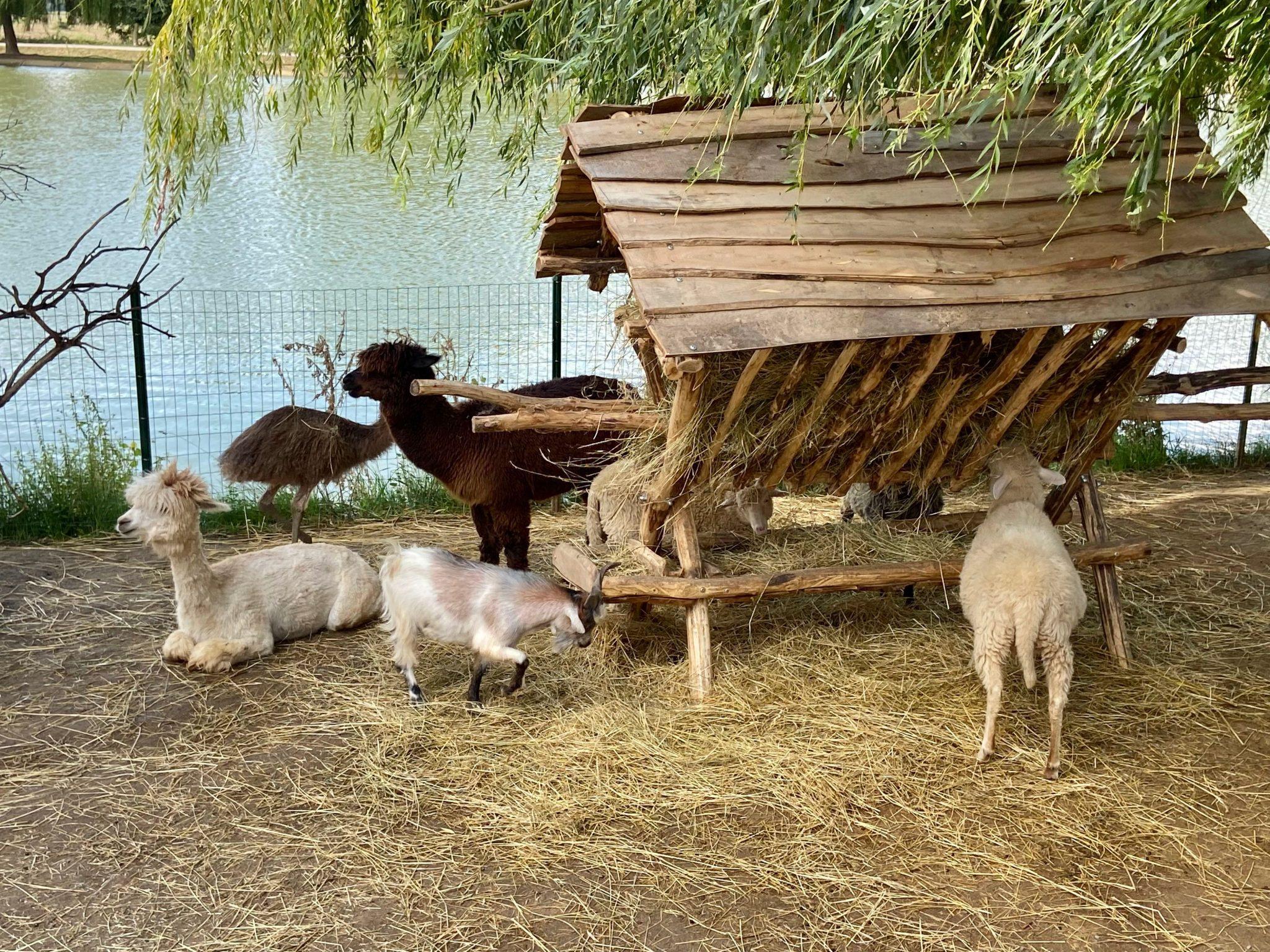 zoo výlet s deťmi za zvieratami
